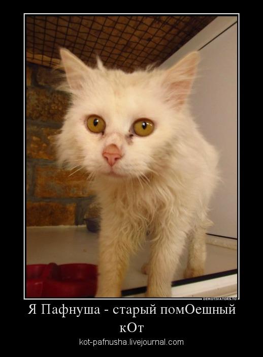 кот пафнуша1