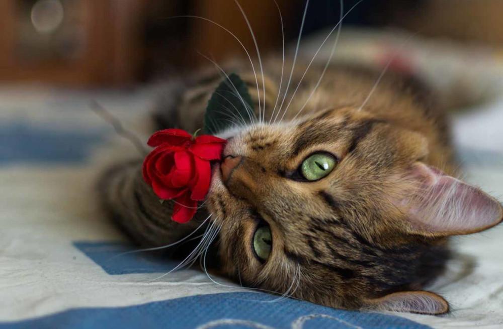 Как сохранить дом чистым, а кошку — здоровой