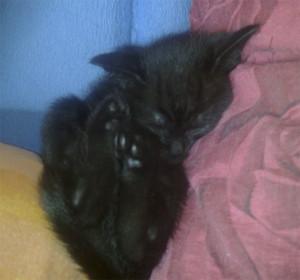 лямур спить