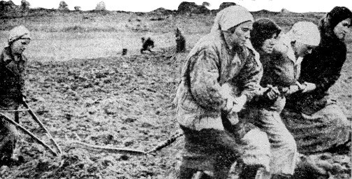 Donauschwaben women pulling a plow during their 5 year forced labor in Soviet Union as war reparations, ca. 1945