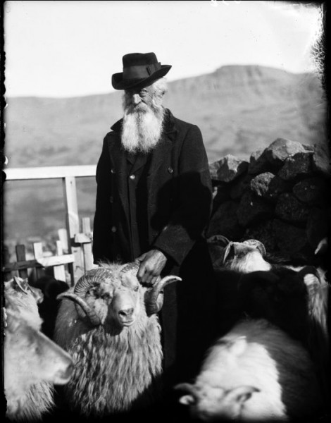 Old farmer with sheep in Iceland, ca. 1920