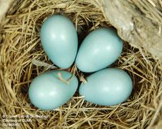Яйца на глаза фото 499-948
