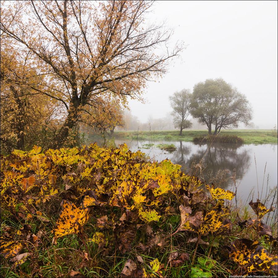 Лопушиная осень