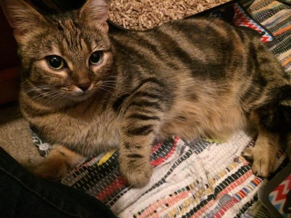 Usk Cat Rescue