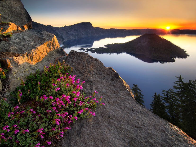 Dennis Frates Penstemon Sunrise. Overall winner and 1st Place, Wildflower Landscapes