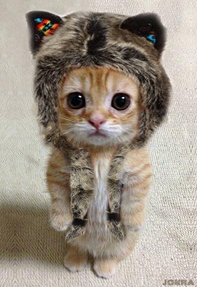 Lil' wolf kitten!