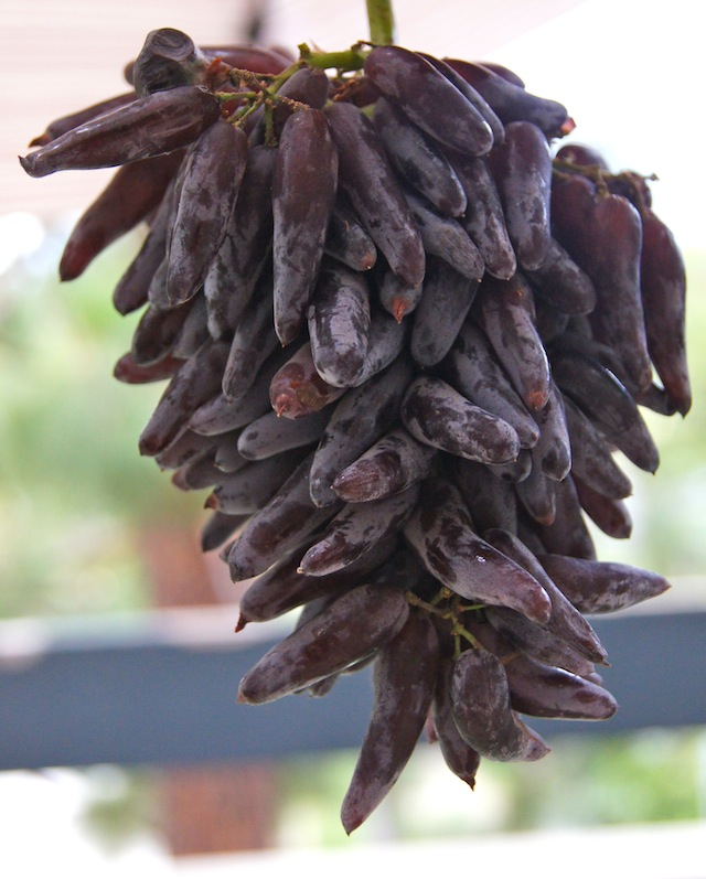 Witch-Finger-Grapes
