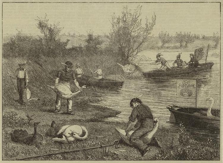 Life_on_the_upper_Thames_-_swan-upping_(1875)