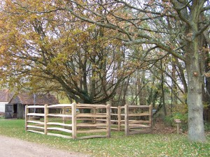 Weald and Downland 011213 (73)