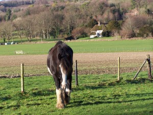 Weald and Downland 291213 (14)