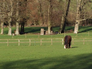 Weald and Downland 291213 (13)
