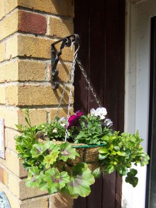 Hanging Basket 040514 (2)