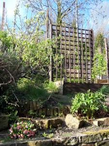 Back Garden 220415 (2).JPG