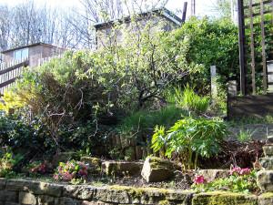 Back Garden 220415 (1).JPG