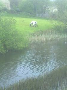 Canal 120515 (3).jpg