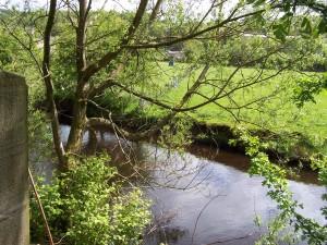 Slaithwaite Canal Walk 160515 (3).JPG