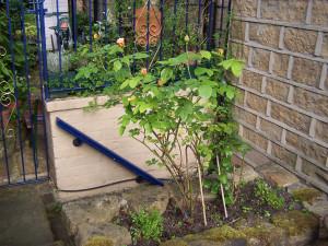 Back Garden 290615 (6).JPG
