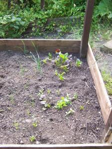 Back Garden 290615 (4).JPG