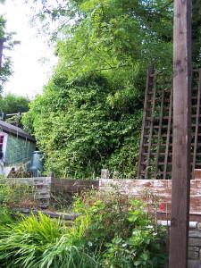 Back Garden 290615 (2).JPG