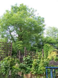 Back Garden 290615 (1).JPG