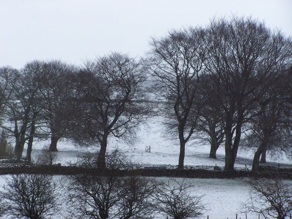Snow 100313 (5)