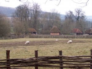 Weald and Downland 010413 (24)