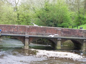 Wallington Birds 040513 (06)