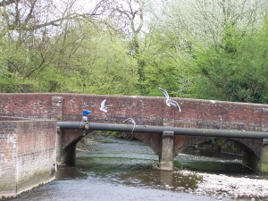 Wallington Birds 040513 (05)
