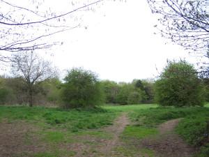 Wallington Water Meadow 040513 (8)