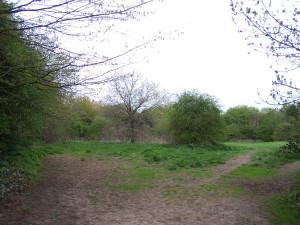 Wallington Water Meadow 040513 (7)