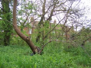 Wallington Water Meadow 040513 (5)
