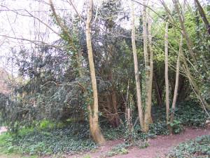Wallington Water Meadow 040513 (4)
