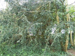 Wallington Water Meadow 040513 (3)