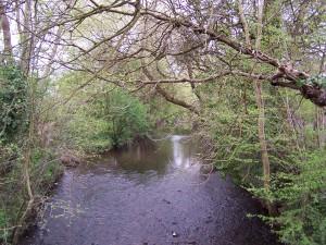Wallington Water Meadow 040513 (2)