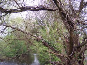 Wallington Water Meadow 040513 (1)