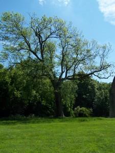 Netley Abbey 270513 (35)