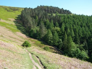 Derwent Valley Walk 070613 (89)