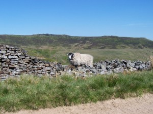 Derwent Valley Walk 070613 (65)