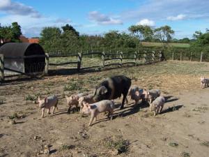 Manor Farm 150813 (37)