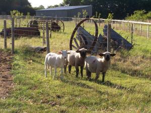 Manor Farm 150813 (36)