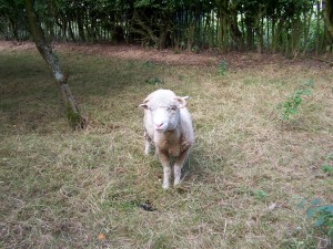 Manor Farm 150813 (32)