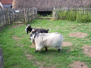 Manor Farm 150813 (28)