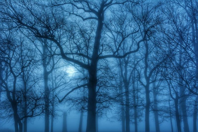 fog_1928982_960_720