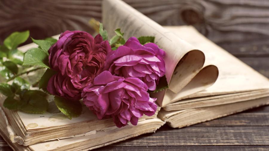 Purple-peonies-book_3840x2160.jpg