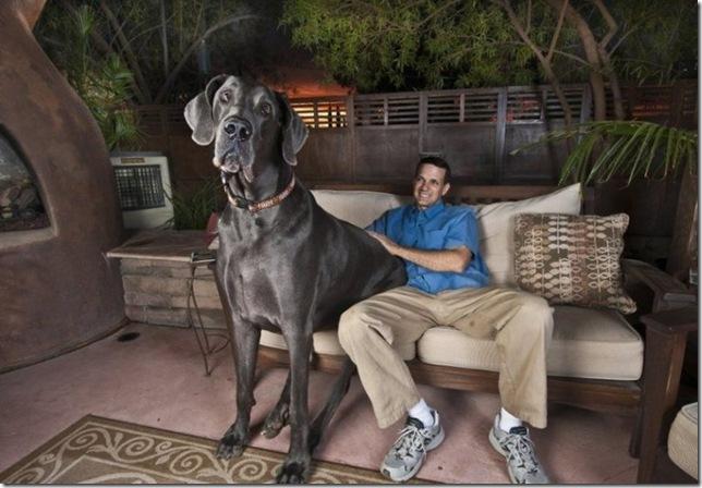 фото самой большой мире показать собака в