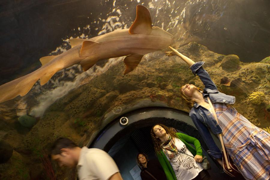 1000x1000px - 2011.12.30-2012.01.03 Tenerife - IMG_6746