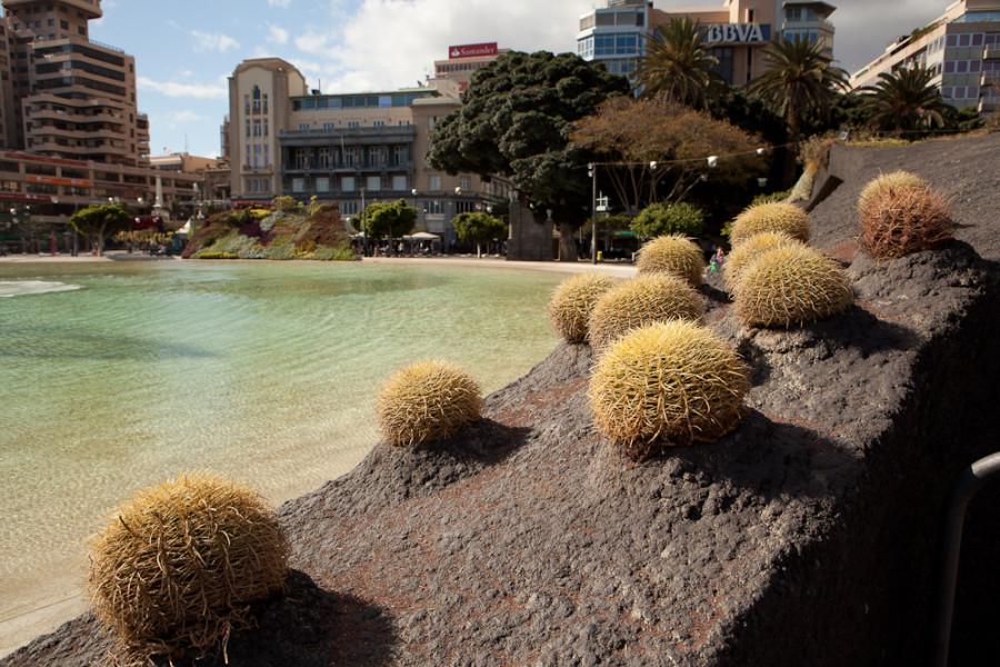 1000x1000px - 2011.12.30-2012.01.03 Tenerife - IMG_5017