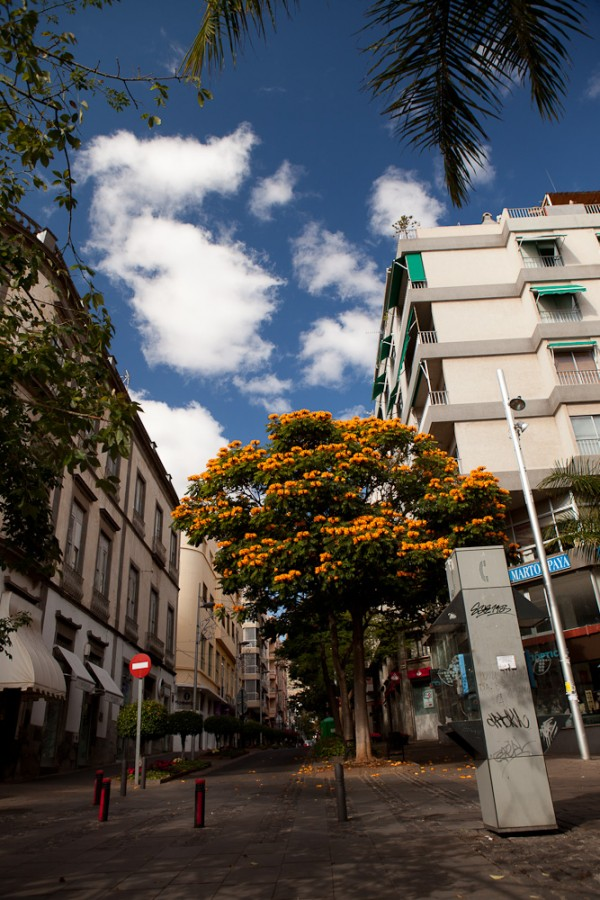 1000x1000px - 2011.12.30-2012.01.03 Tenerife - IMG_5740