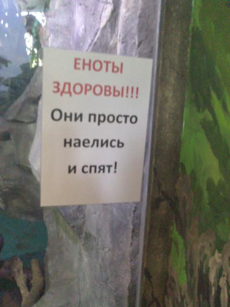 еноты здоровы_