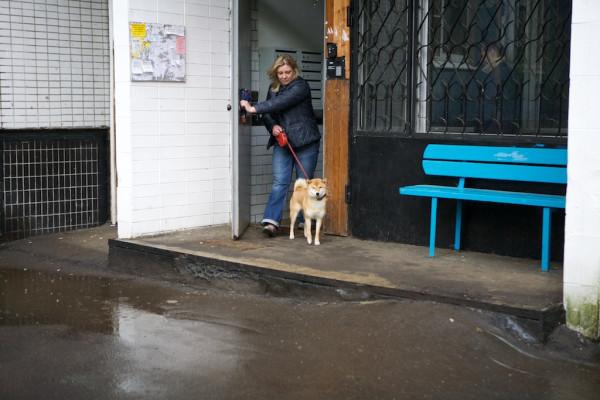 Part18 Домой дома из дома на работу прогулка с собакой Юкой кролик Няша _MG_4118